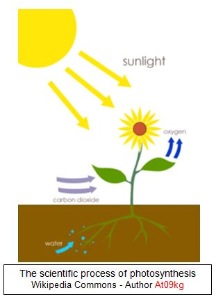 simple explanation of photosynthesis Photosynthesis is a process that occurs in plants, algae, and some bacteria  an  example of carbohydrates would be simple sugars such as.