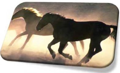 Isn't it proven how horses have evolved?