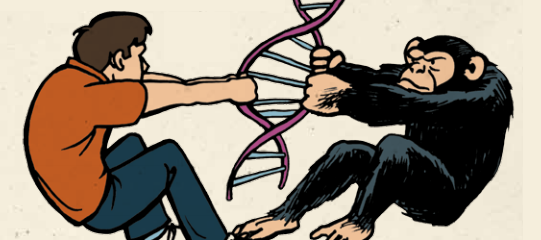 Don't Humans Share DNA with Apes? Isn't that Proof of Evolution?