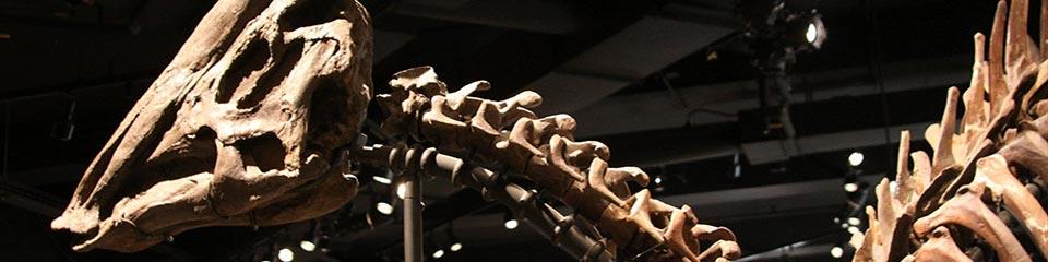Tours – Dinosaur Museum »