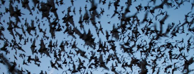 How Does a Bat Know It's Dark Outside?