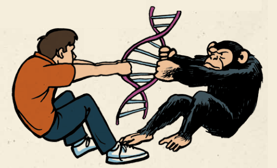 Humans and Apes from the Same Ancestor?? | Alpha Omega Institute