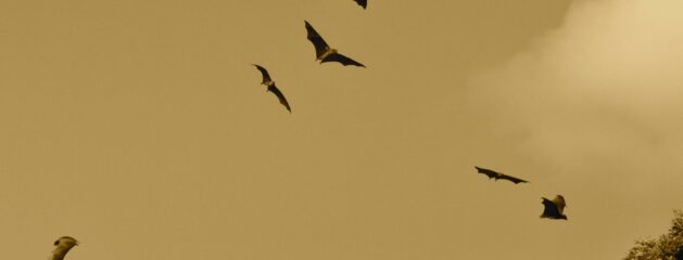 """Unexpected Aerodynamics of Bat Flight"""